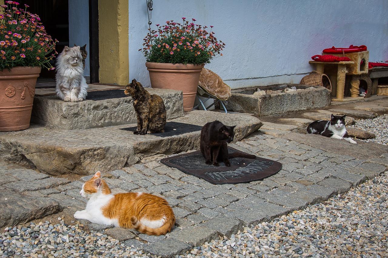 Как бороться с соседом, который нарушает правила использования жилого дома